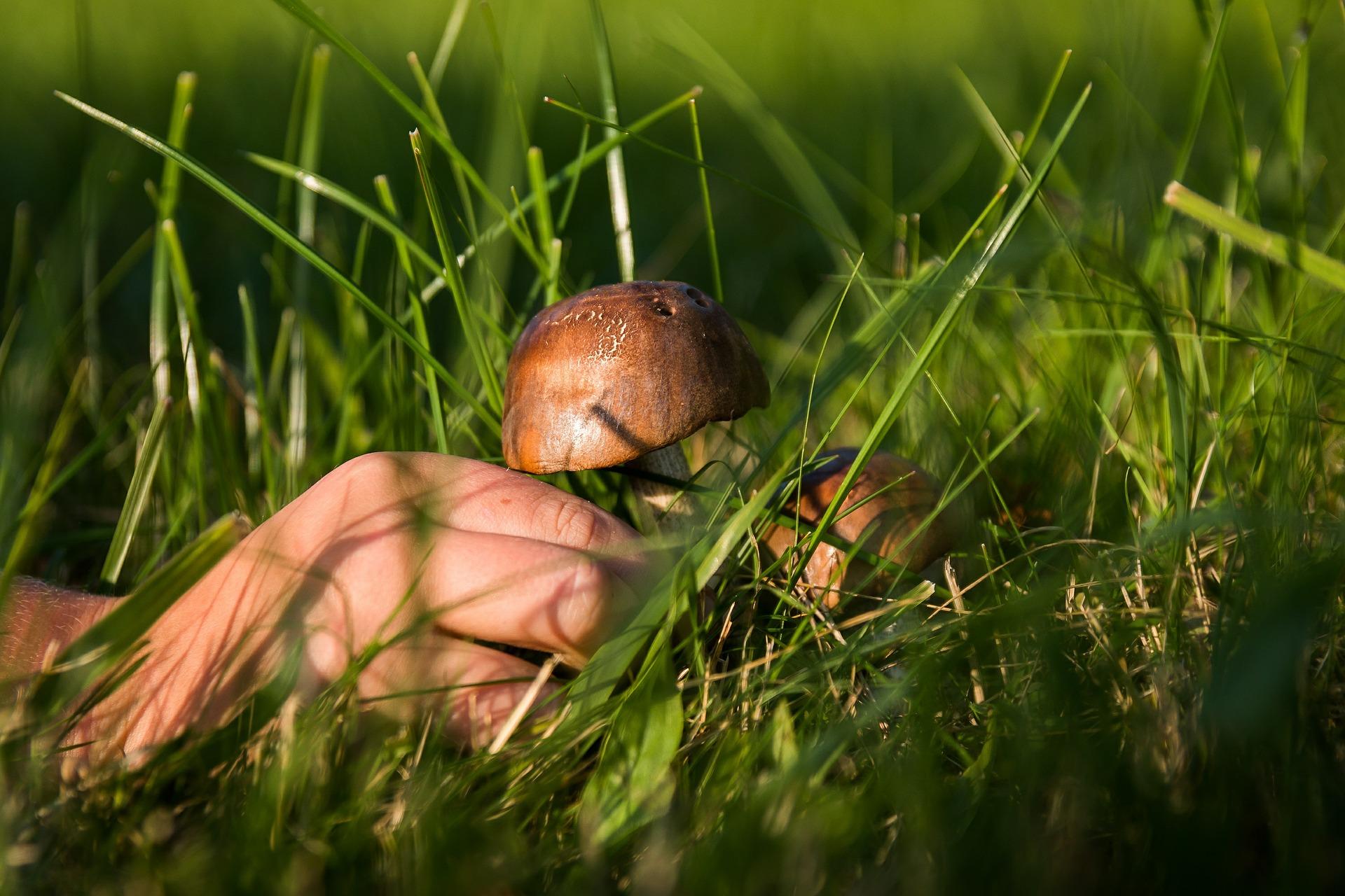 mushrooms-454153_1920
