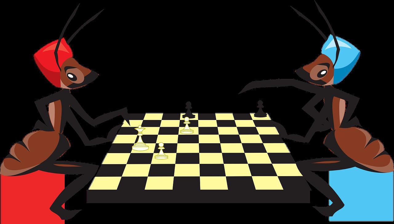 szachy owady