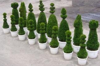 zielone szachy, szachowy ogród,