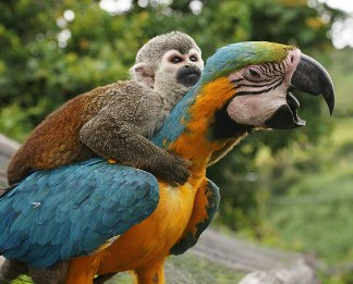 Metoda papugi. A może metoda małpy?